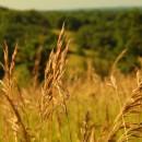 Des désirs d'herbes folles éclairés de hauts crépis du soleil…