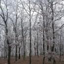 Au fond des forêts…