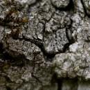 Une longue couverture d'arbres et de roches…