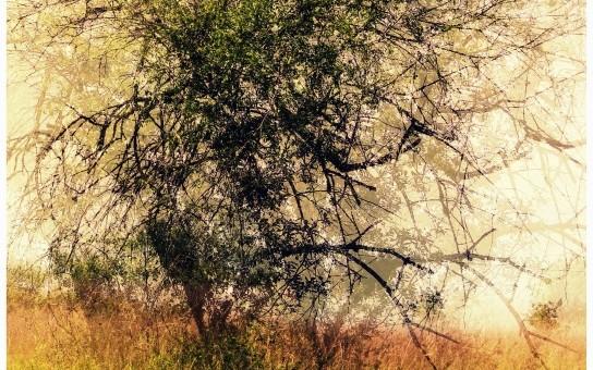La vitesse des arbres immobiles…