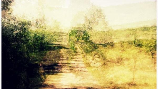 La vitesse des arbres immobiles… (suite 5)
