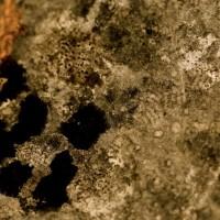 Ces baisers rageurs du lichen…